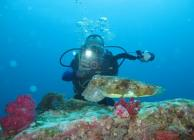 Myanmar 2016 Cuttlefish IMG_8012_400.jpg