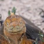Galapagos2019-44.jpg
