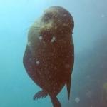 Galapagos2019-3.jpg