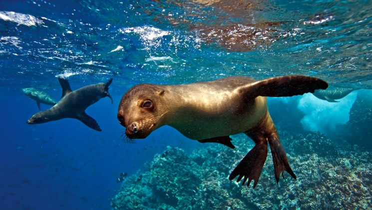 sea lion of Galapagos Islands