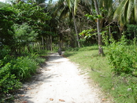 Samui nature treks